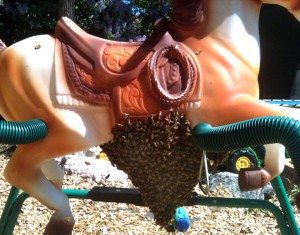 Honey_Bee_Swarm_Removal_Kids_Yard_Toys